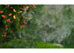 autoimune bolesti uključuju i alergije