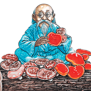 Ljekovite gljive Dr Myko San logo