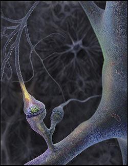 multipla skleroza, demencija, parkinson, alzheimer i druge neurodegenerativne bolesti onemogućuju ispravan rad neurona i prijenos signala između sinapsi