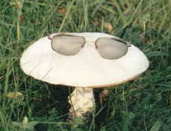 ljekovite gljive myko san